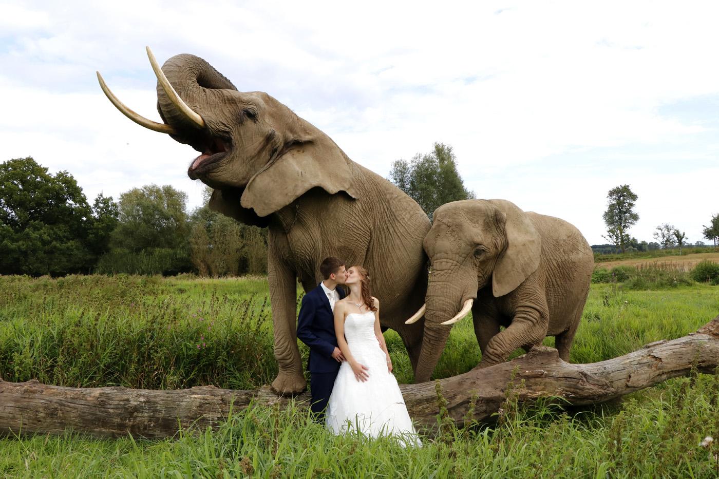 Elefantenhof Platschow Tierschutz